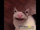 Котя психодел