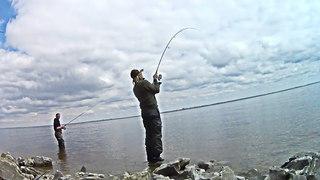 Берш на спиннинг или ловля хищника на водохранилище в конце весны -