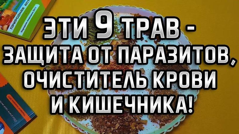 ЭТИ 9 ТРАВ - ЗАЩИТА ОТ ПАРАЗИТОВ, ОЧИСТКА КРОВИ И ПЕЧЕНИ! Виталий Островский. Здоровье, глисты