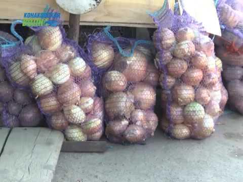 Конаковский отдел Роспотребнадзора рассказал, как выбирать фрукты и овощи в летний период