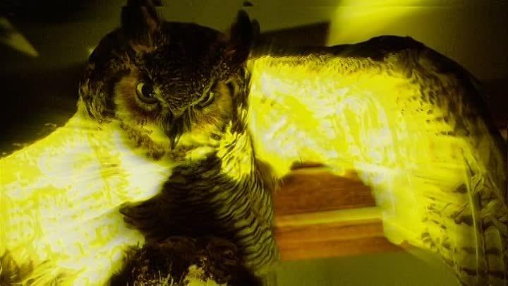 Природа зверя 2007 Комедия Мелодрама Ужасы