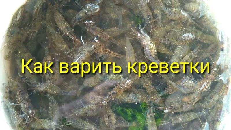 Как варить черноморскую креветку