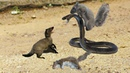 Toxic from King Cobra terrible - but the Squirrels are too crowded. Who is win