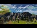 Alicia Online Обзор на моих лошадей Январь 2018