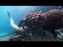 Танцующая девушка и подводный мир океана