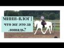МИНИ-ВЛОГ | Что же это за лошадь?