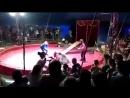 Под Волгоградом медведь едва на загрыз дрессировщика в частном цирке-шапито