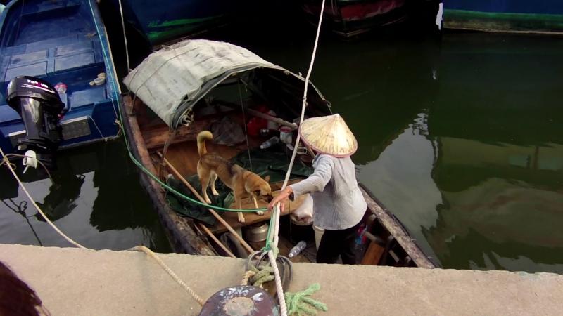 Портовая бабка-таксистка и её собака