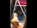 Знакомство Лёни с котом