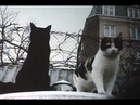 Peter Freestone Talks About Freddie His Cats