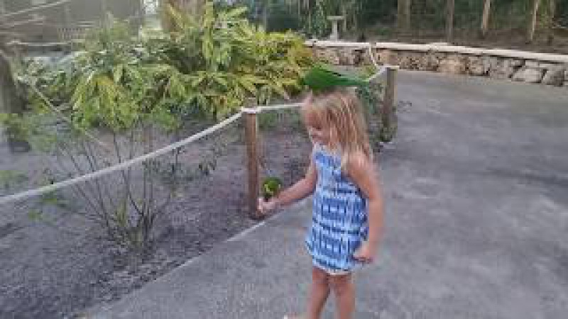 Sabrina Feeding Lory Birds