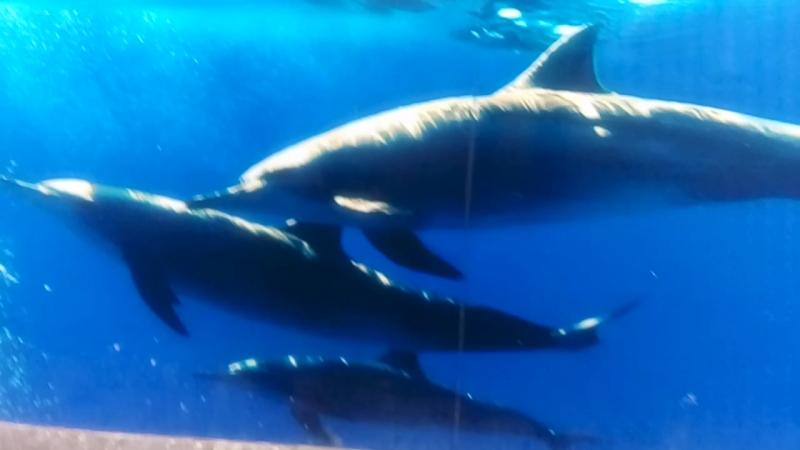 Увидели траву Полынь. Фоткаемся на фоне дельфинов