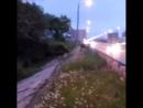 На Северном обходе Рязани жители города засняли лосей Соответствующее видео появилось в группе Новости Рязани ВКонтакте На з