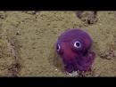 Необычный маленький фиолетовый осьминог похожий на игрушку