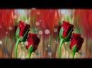 Фон с розами. Красивый фон для ваших видео и слайдшоу