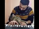 Piano sevdalısı, dünya tatlısı evladım benim 😺🎹❤ .