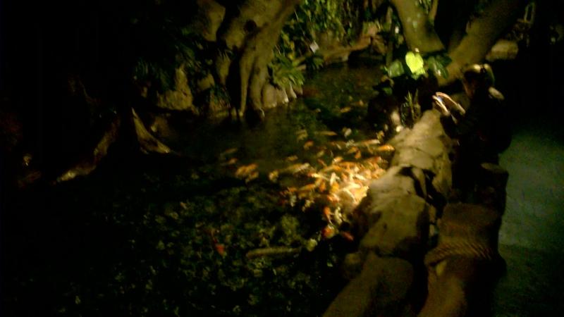 Адлер Океанариум представление с русалкой 1 часть