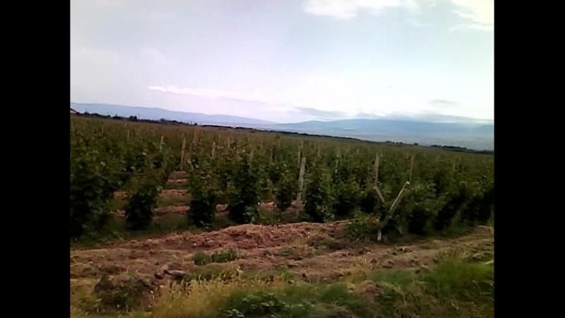Виноградники на границе с Турцией .31.05.2018