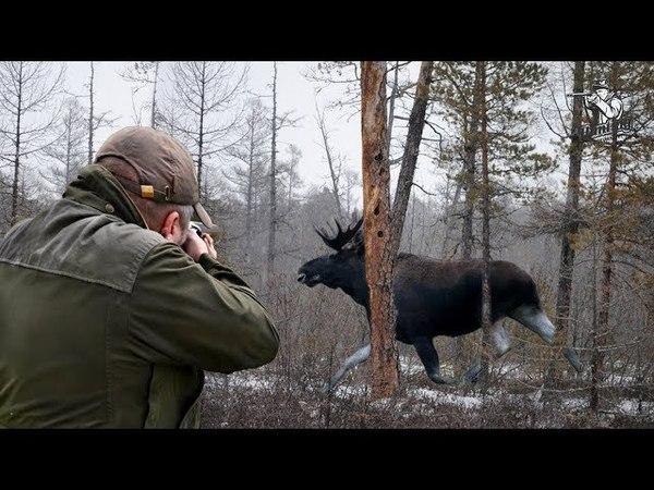 Охота на лося   Moose hunting