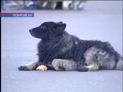 В центре города собака напала на школьника