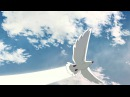 MC-21 Rollout animated movie