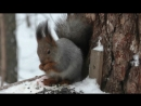 Белочка в лесу у НВВПОУ (НВОКУ) 1.03.18 Новосибирск