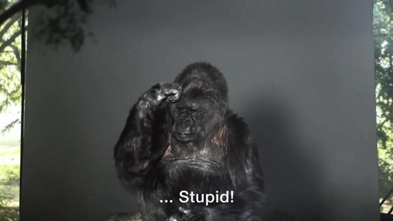 Подросток стал обезьяной из за игр и разучился говорить из за запада и чипизации, до чего доводит интернет и компьютерные игры.