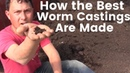 How the Best Worm Castings are Made that Can Double Your Harvest
