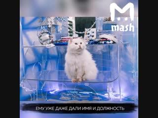 В резиденции костромской Снегурочки гостей встречает огромный белый кот