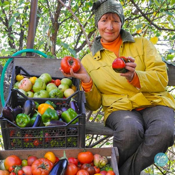 Я в этом году ничего сажать не буду, устала! Ну, разве что только зелень посею, помидоров посажу, перца, кабачков, огурцов, патиссонов, баклажанов, морковки немножко, тыкву два вида и