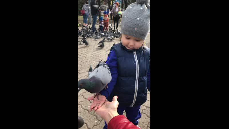 23 04 2019 Анюта и гули в парке им Пушкина кушают с рук