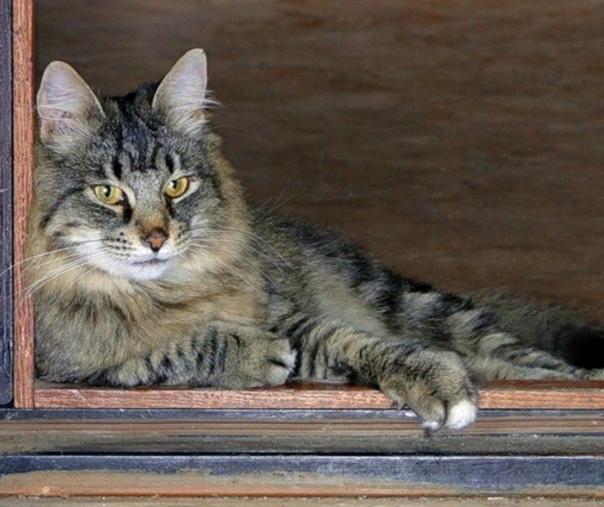 В тот вечер, когда пропал кот, Марья Степановна пряталась в кустах Она, конечно, знала, что это не по статусу жене военнослужащего, но поделать с этим ничего не могла. Жизнь, как говорится,