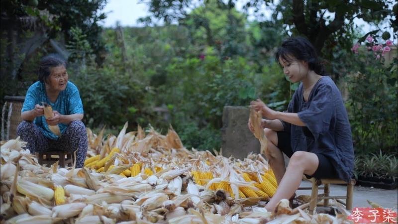 金黄的季节,载满了收获的喜悦和玉米的香甜 Corn | Liziqi Channel