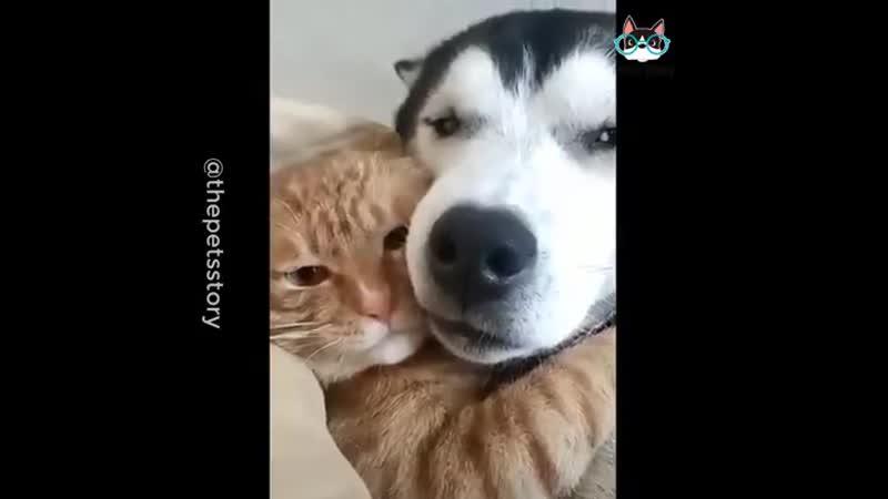 Истинная любовь! 💕