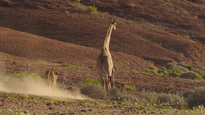 BBC Планета Земля II 2016 4 серия Пустыни