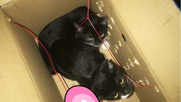 Вместо взрывчатки нашли котят: «Республику кошек» закрыли из-за оставленной коробки Вчера, 1 августа в петербургском котокафе «Республика кошек и котов» нашли бесхозную коробку с проводами и без