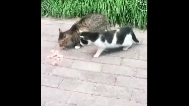 Смешная подборка с котиками 480p mp4