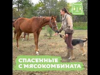 Новый дом для лошадок