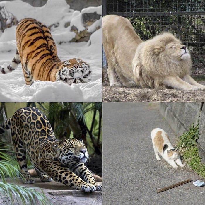 Кошки есть кошки
