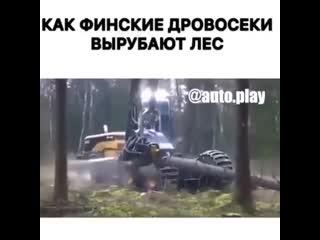 Как финские дровосеки вырубают лес