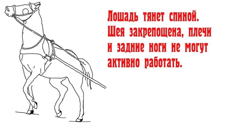 ЗАЕЗДКА И ТРЕНИРОВКА МОЛОДОЙ ЛОШАДИ 8N_86mAH29s