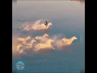 На лошадей можно смотреть  бесконечно, они неповторимы, как огонь, вода и облака.