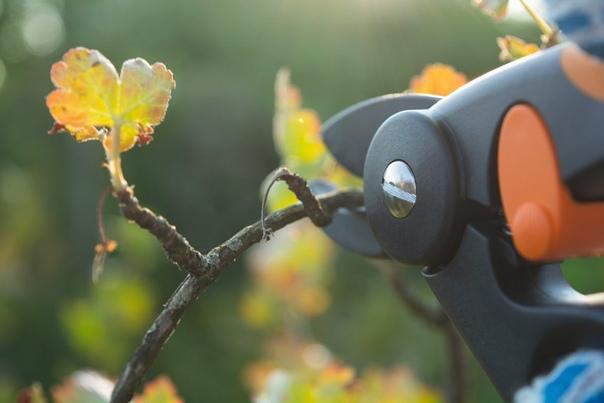 Осенняя обрезка ягодных кустарников. Ягодные кустарники за период вегетации и плодоношения растрачивают достаточно много сил. Чтобы помочь им подготовиться к новому сезону и продлить жизнь,