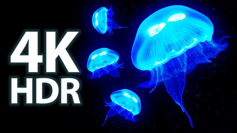 Amazing Jellyfish Aquarium in 4K HDR Soothing Relaxing Music Great for Oled HDR TV's