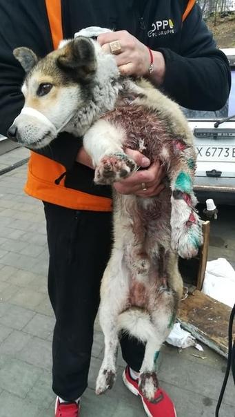 Люди, которые издеваются над животными не достойны называться...