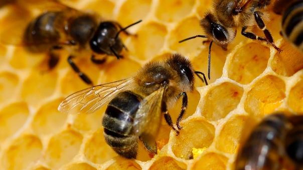 Названы причины странного мора пчёл в России   ➡Подробнее:...