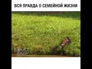 Вся правда о семейной жизни))