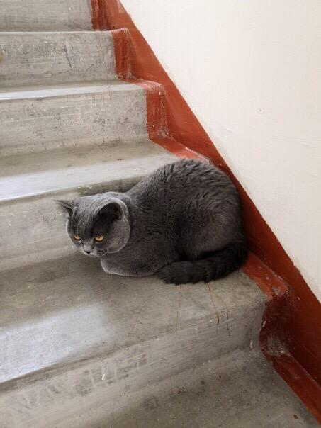 В России предлагают с 2020 года ввести наказание за выброшенных на улицу домашних животных Поддерживаете