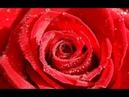Медитация Любовь, целостность, Единство, вечность