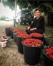 Столько труда вложено, чтобы вырастить столько ягод, ! Дай, Бог, чтобы нашлись покупатели!